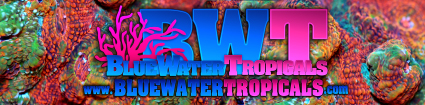 logo_bluewatertropicals.jpg