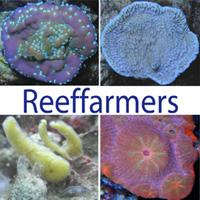 logo_reeffarmers.jpg